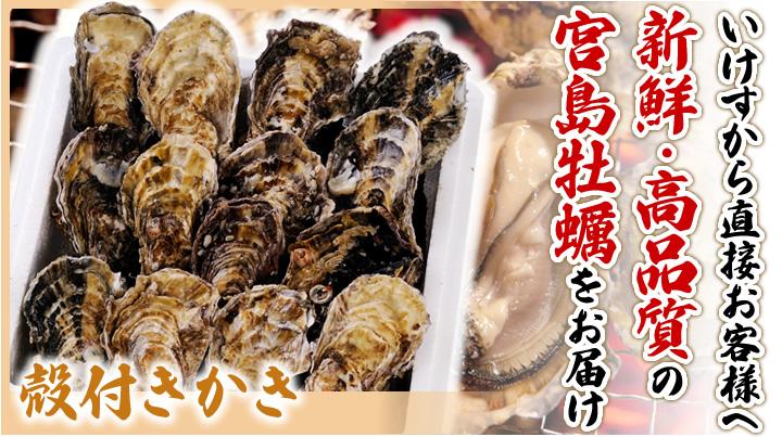 いけすから直接お客様へ 新鮮・高品質の宮島牡蠣をお届け